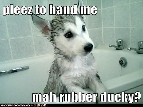 pleez to hand me   mah rubber ducky?