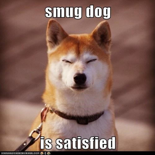 smug dog  is satisfied