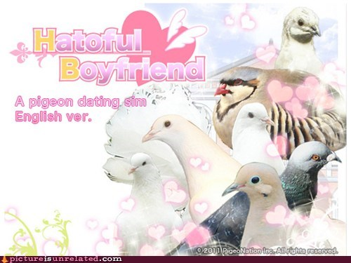 birds,dating sim,game,lovers,pigeons,wtf