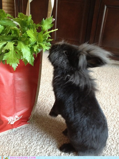 Acting Like Animals: Big Bag O' Bun Noms