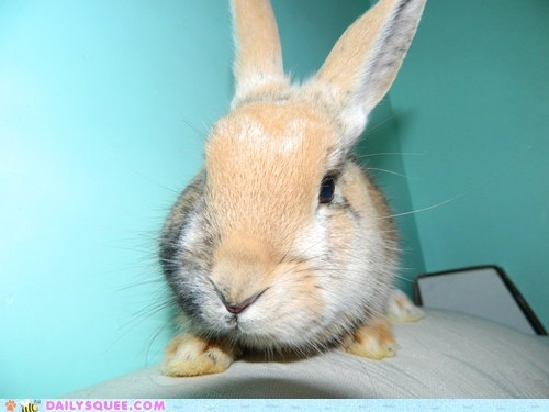 Cream-Colored Bunny With Blue Backdrop