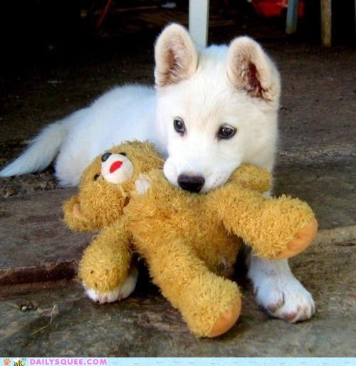 baby,dogs,friend,possessive,protective,puppy,stuffed animal,teddy bear,territorial