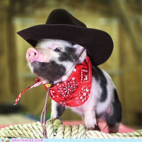 acting like animals,baby,bandana,costume,cowboy,dressed up,Hall of Fame,hat,pig,piglet