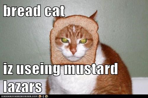 bread cat  iz useing mustard lazars