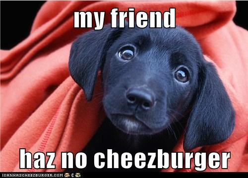 my friend  haz no cheezburger