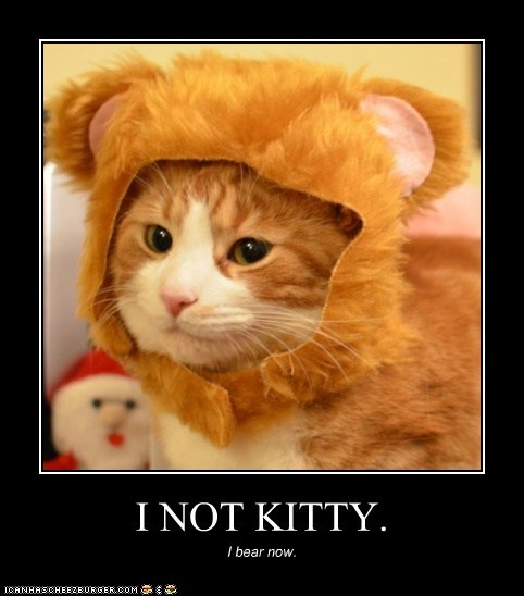 I NOT KITTY.