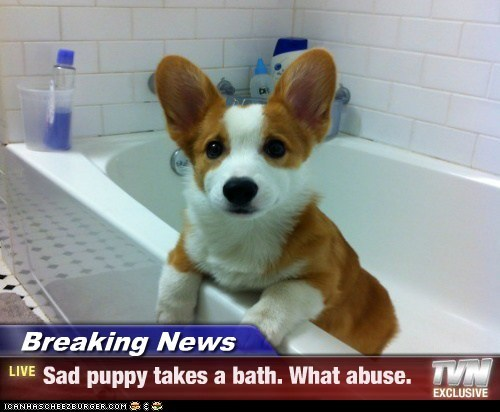 Breaking News - Sad puppy takes a bath. What abuse.