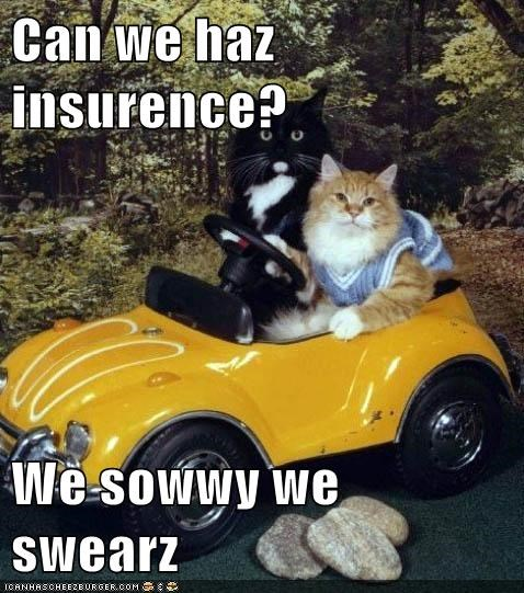 Can we haz insurence?  We sowwy we swearz