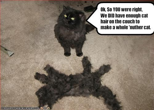 cat hair no way