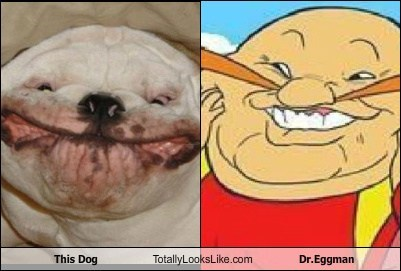 This Dog Totally Looks Like Dr.Eggman