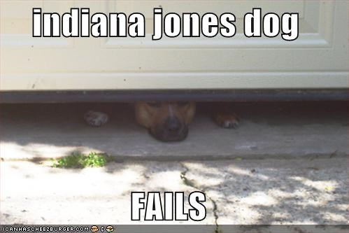 indiana jones dog  FAILS