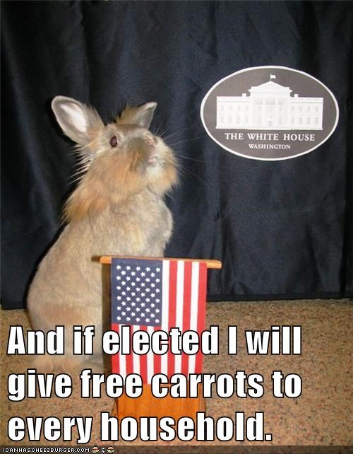 bunny,campaign platform,carrots,president,presidential election,rabbit,running for president