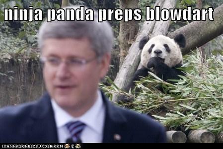 Canada,ninjas,panda,political pictures,stephen harper