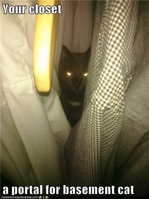 Your closet  a portal for basement cat