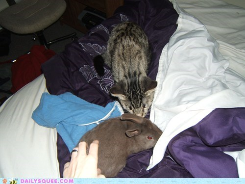 bed,blankets,bunny,cat,friends,reader squees,sniff