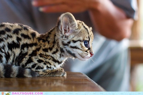 The Littlest Leopard