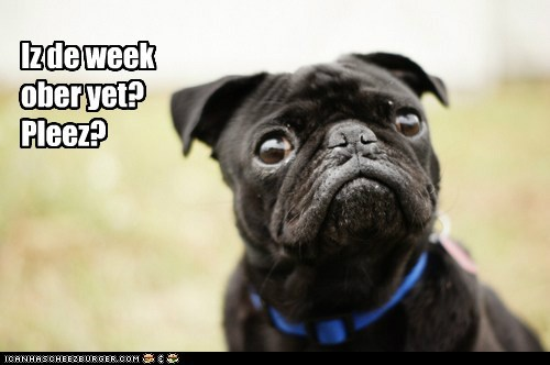 desperate,FRIDAY,please,pug,week,work week
