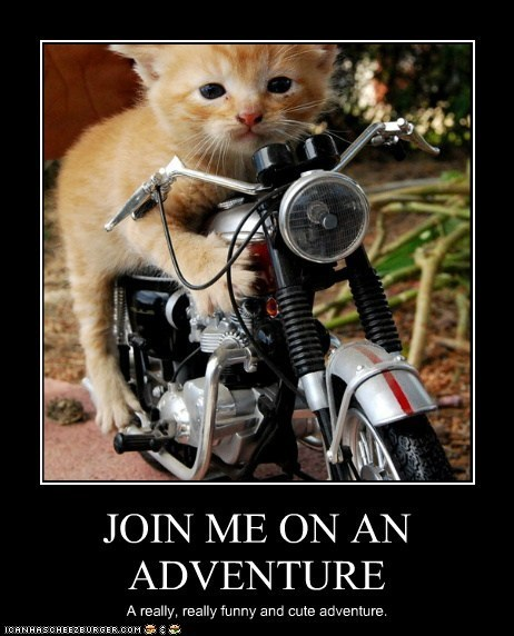 LOLcats, the site for LOLZ and CATS, Launches Thursday!