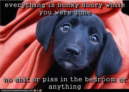 everything is honky doory while you were gone  no shit or piss in the bedroom or anything