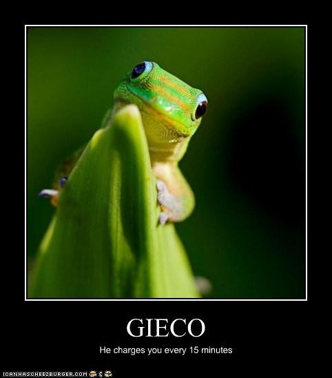 GIECO
