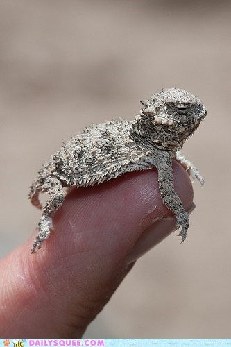 Squee Spree: Lizard Week!