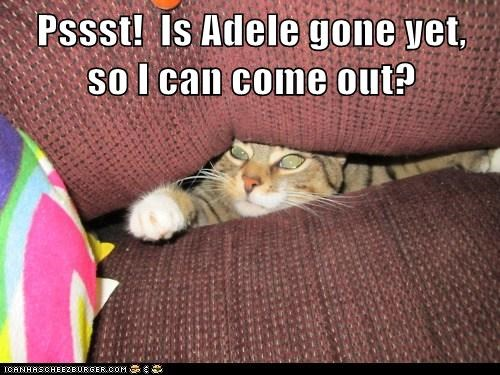 Pssst!  Is Adele gone yet,  so I can come out?