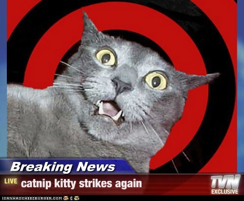 Breaking News - catnip kitty strikes again