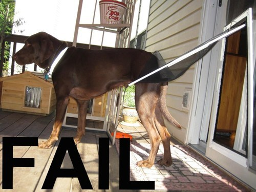 Doggie Door FAIL