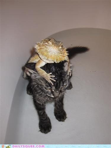 bath,friends,Interspecies Love,kitty,lizard,ride