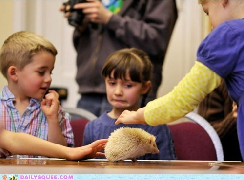albino,hedgehog,kids,pet,scared