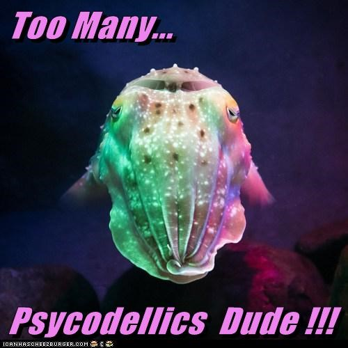 Too Many...  Psycodellics  Dude !!!