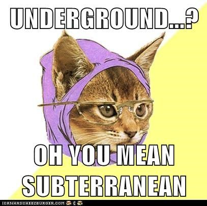 Cats,Hipster Kitty,hipsters,subterranean,underground