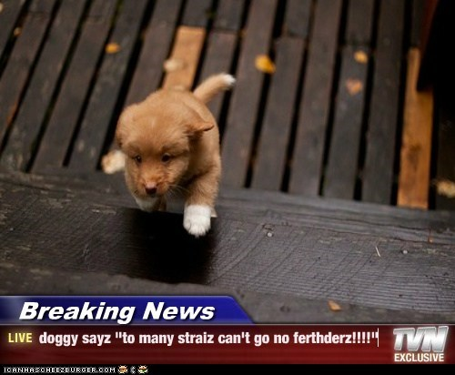 "Breaking News - doggy sayz ""to many straiz can't go no ferthderz!!!!"""