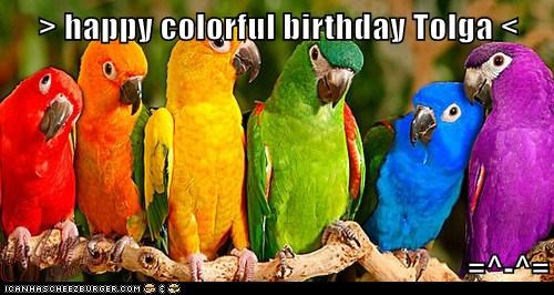 > happy colorful birthday Tolga <  =^-^=