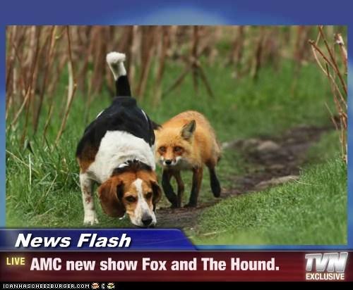 News Flash - AMC new show Fox and The Hound.