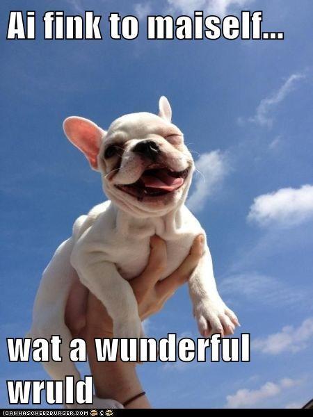 amazing,awesome,french bulldogs,happy,happy dog,tongue,tongue out,wonderful world