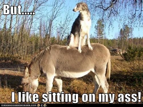 ass,donkey,russian wolfhound,sitting on my ass