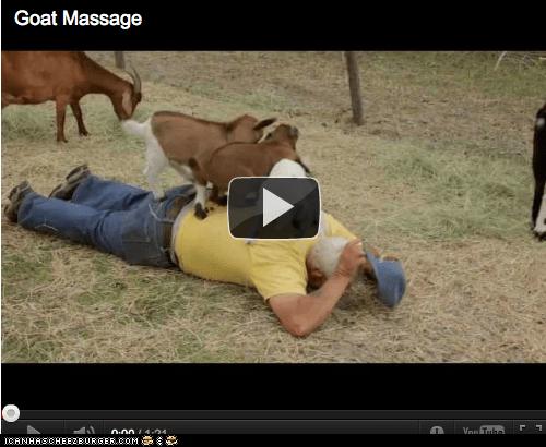 back,goats,hooves,humans,massage,massaging,walking