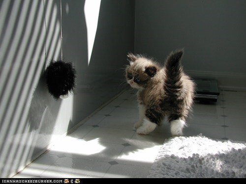 Cyoot Kitteh of teh Day: Fuzzball vs. Fuzzball