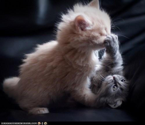 Cyoot Kittehs of teh Day: *BOOP* Ur Noze!