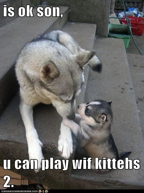 is ok son,  u can play wif kittehs 2.