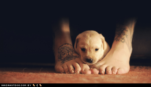 adorable,cute puppy,cyoot puppeh ob the day,protect,protection,puppy,whatbreed