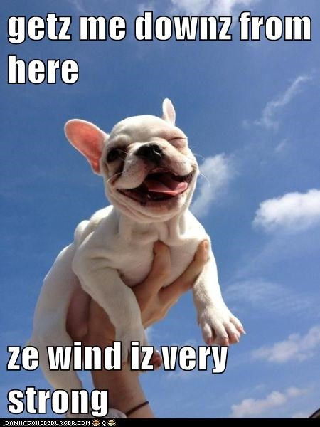 getz me downz from here  ze wind iz very strong
