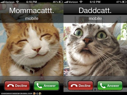 Momcat and Dadcat