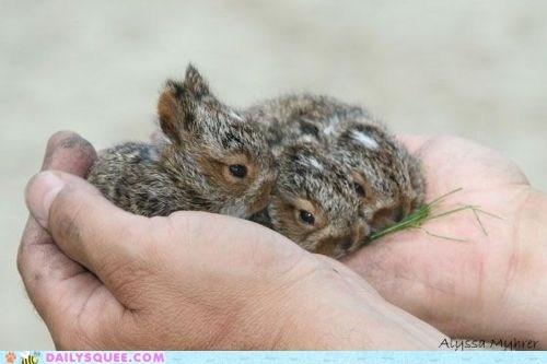 Babies,best of the week,grass,Hall of Fame,hands,happy bunday,spotted