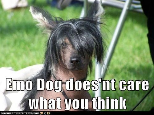 Emo Dog does'nt care what you think