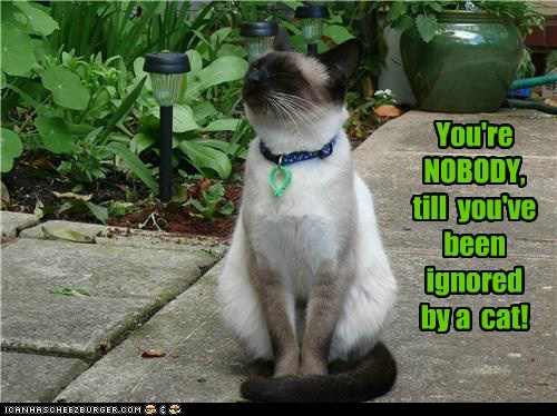 You're NOBODY,till  you've beenignored  by a  cat!