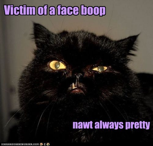 Victim of a face boop - nawt always pretty