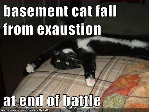 basement cat fall from exaustion  at end of battle