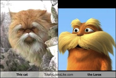 This Cat Totally Looks Like The Lorax